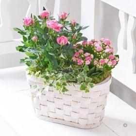 Plants & Planted Baskets